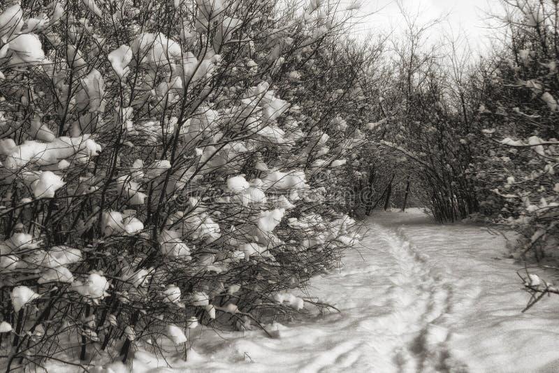 De winterlandschap met sneeuw en weg stock afbeelding