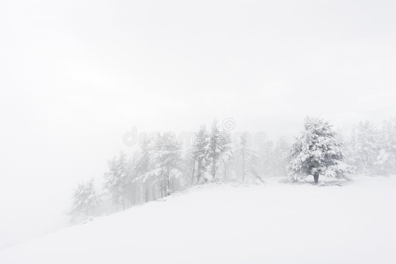 De winterlandschap met sneeuwbomen op blizzard stock fotografie