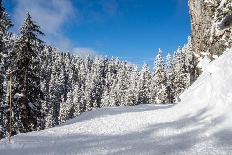 De winterlandschap met sneeuwbos hoog in de bergen in een zonnige dag royalty-vrije stock foto's