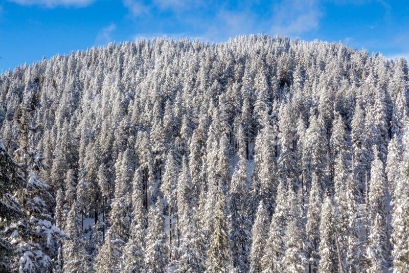 De winterlandschap met sneeuwbos hoog in de bergen in een zonnige dag royalty-vrije stock afbeelding