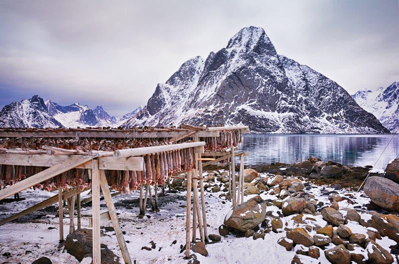 De winterlandschap met traditionele Noorse droge kabeljauwvissen stock fotografie