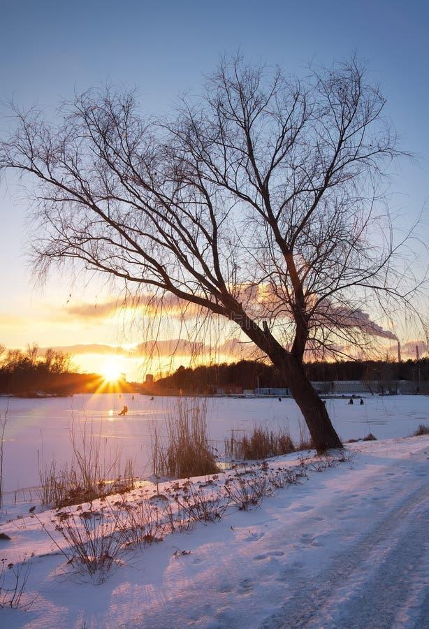 De winterlandschap met zonsonderganghemel. stock foto