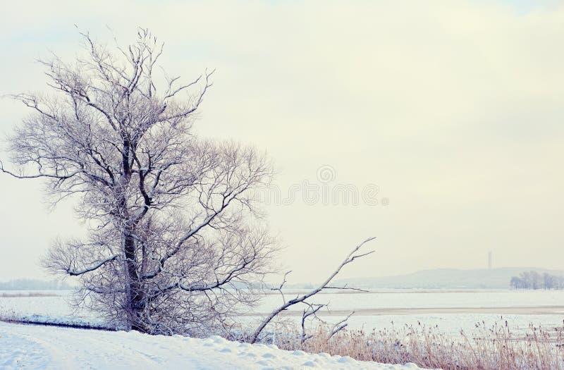 De winterlandschap op Havel-Rivier (Duitsland) Havelland stock afbeeldingen