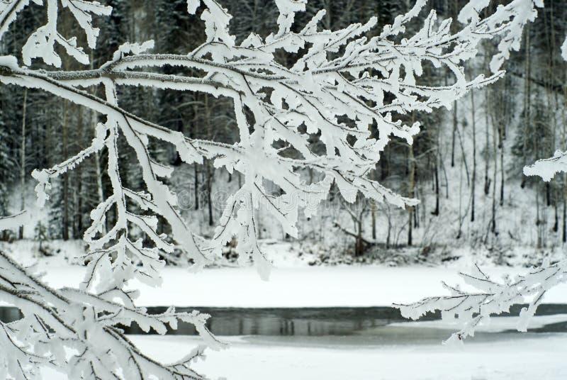 De winterlandschap op de kust van een bijna bevroren rivier zichtbaar door de ijzige takken van een boom in de voorgrond royalty-vrije stock fotografie