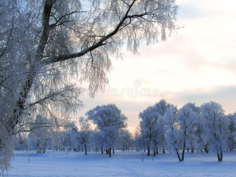 De winterlandschap in rijp stock fotografie