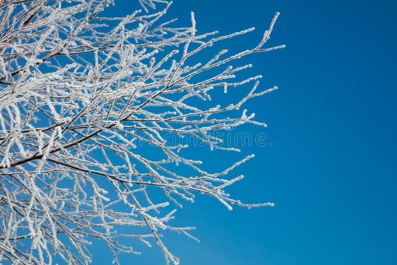 De winterlandschap - sneeuw behandelde ijzige witte takken stock foto