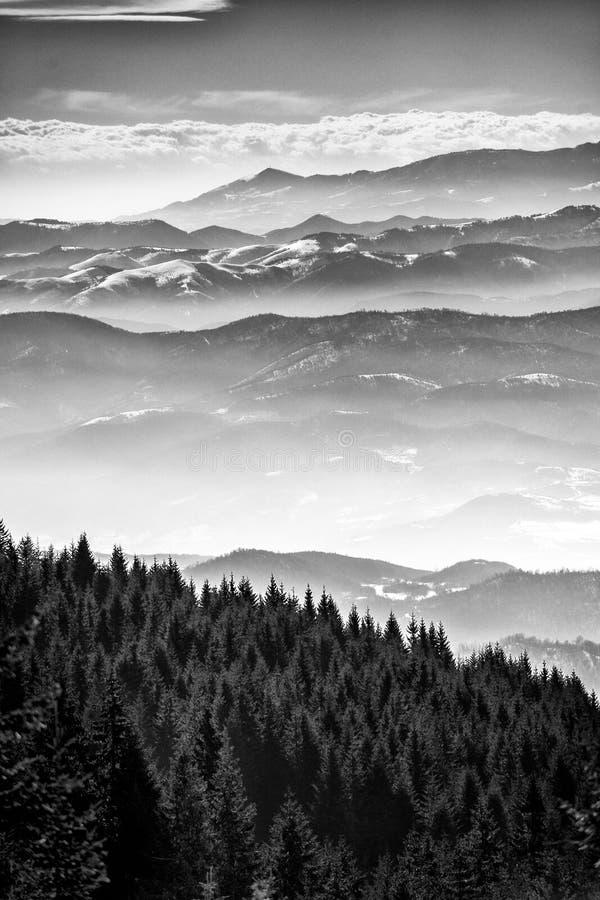 De winterlandschap, sparbos door sneeuw wordt behandeld en bergpieken in de afstand, Mt Kopaonik, Servië royalty-vrije stock fotografie