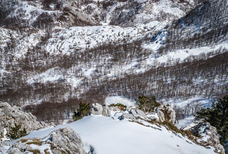 De winterlandschap van bomen en heuvels in sneeuw stock foto's