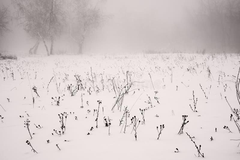 De winterlandschap van een ijzig gebied op een mistige achtergrond stock foto's