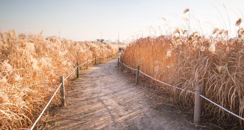 De winterlandschap van Haneul-Park stock foto