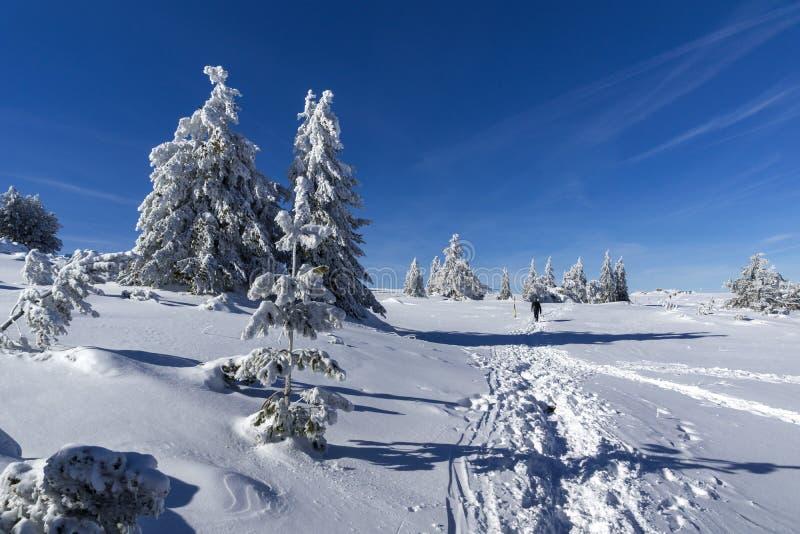 De winterlandschap van het gebied van Plateauplatoto bij Vitosha Berg, Sofia City Region, Bulgarije stock foto's