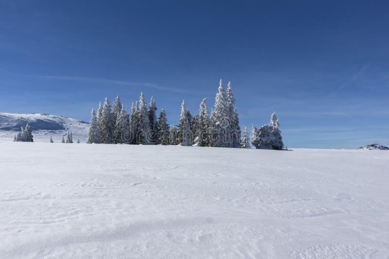 De winterlandschap van het gebied van Plateauplatoto bij Vitosha Berg, Sofia City Region, Bulgarije stock fotografie