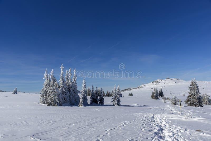 De winterlandschap van het gebied van Plateauplatoto bij Vitosha Berg, Sofia City Region, Bulgarije royalty-vrije stock afbeeldingen