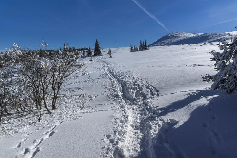 De winterlandschap van het gebied van Plateauplatoto bij Vitosha Berg, Sofia City Region, Bulgarije royalty-vrije stock fotografie