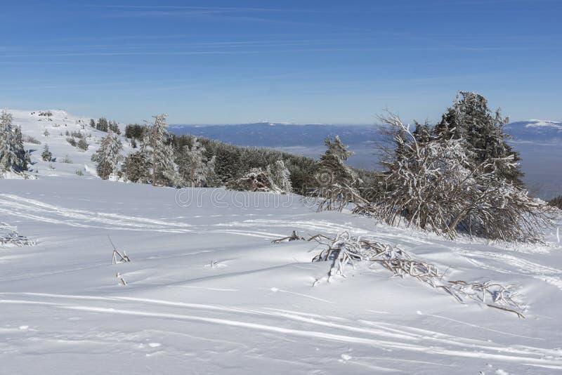 De winterlandschap van het gebied van Plateauplatoto bij Vitosha Berg, Sofia City Region, Bulgarije royalty-vrije stock foto