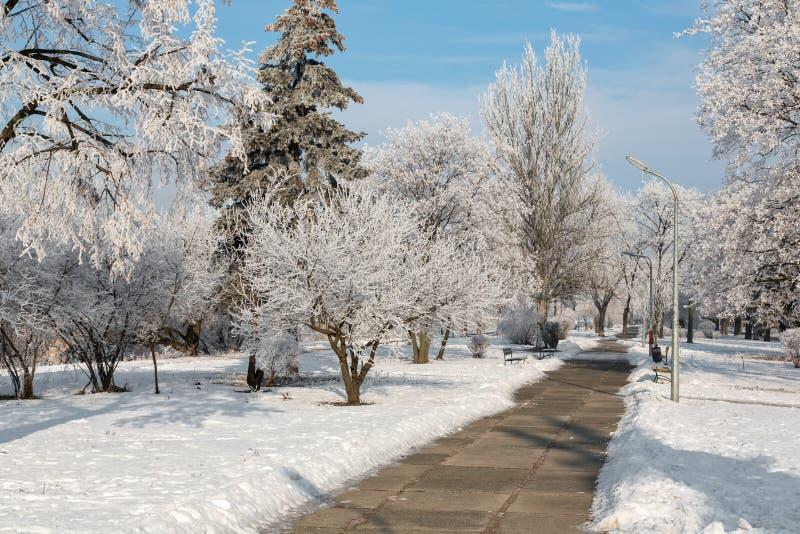 De winterlandschap van ijzige bomen, witte sneeuw in stadspark Bomen die met sneeuw worden behandeld stock afbeelding