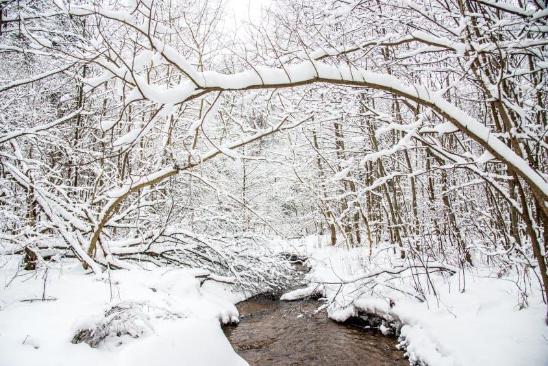 De winterlandschap van kleine bosstroom royalty-vrije stock foto's