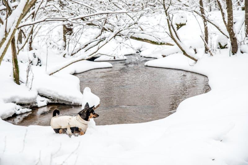 De winterlandschap van kleine bosstroom en hond stock afbeelding