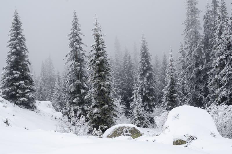 De winterlandschap van lange pijnbomen op een kleine heuvel in sneeuwsneeuw royalty-vrije stock foto