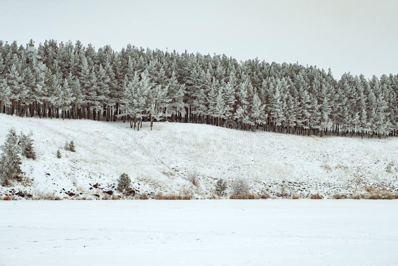 De winterlandschap van pijnboombos op de helling royalty-vrije stock fotografie