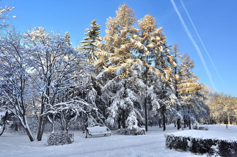 De winterlandschap van stadspark stock afbeelding