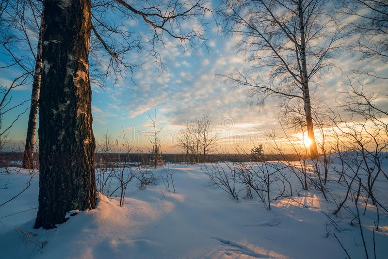 De winterlandschap, zonsondergang onder de berken royalty-vrije stock afbeeldingen
