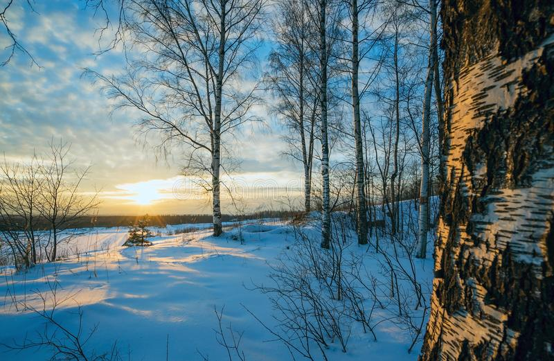 De winterlandschap, zonsondergang onder de berken stock afbeelding