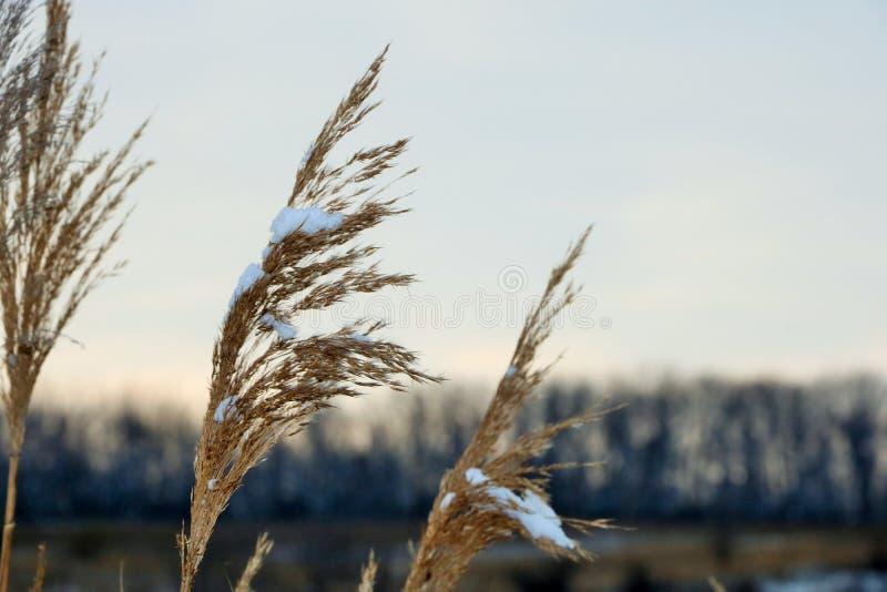 De winterlandschappen stock illustratie