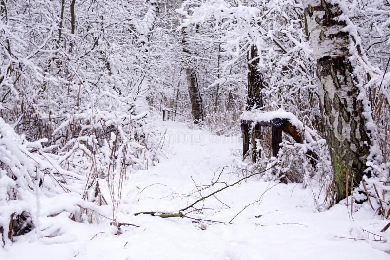 De wintermanier, houten omheining en berk stock fotografie