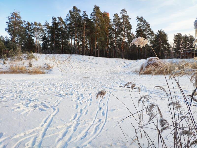 De wintermeer in het bos stock fotografie