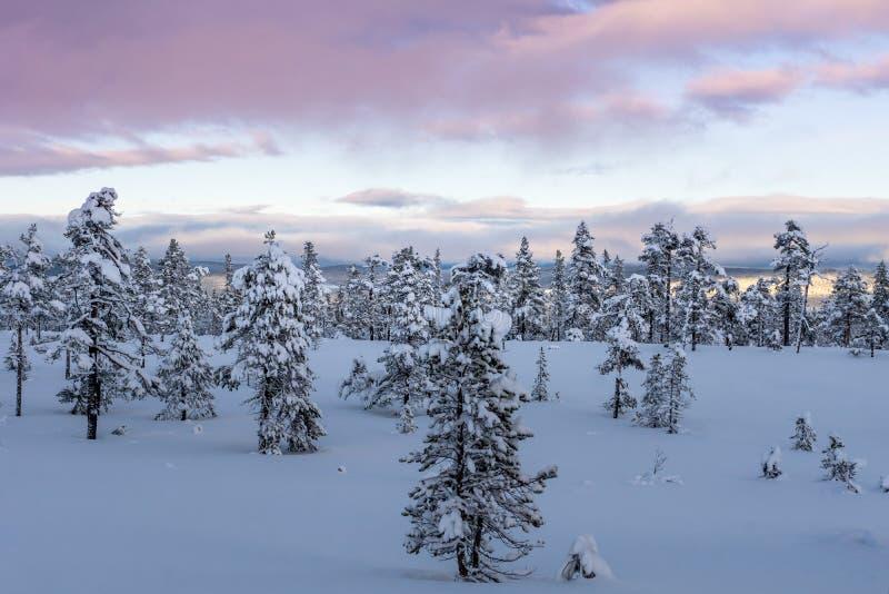 De wintermening van een nationaal park in de bergen in Zweden stock afbeeldingen