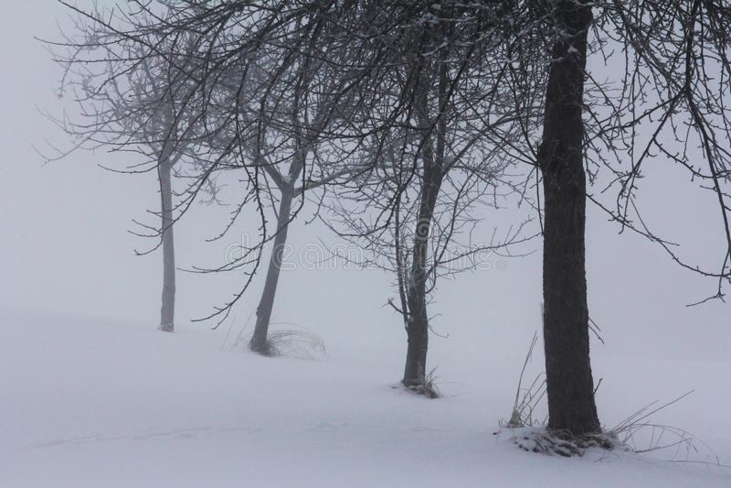 De wintermist stock afbeelding