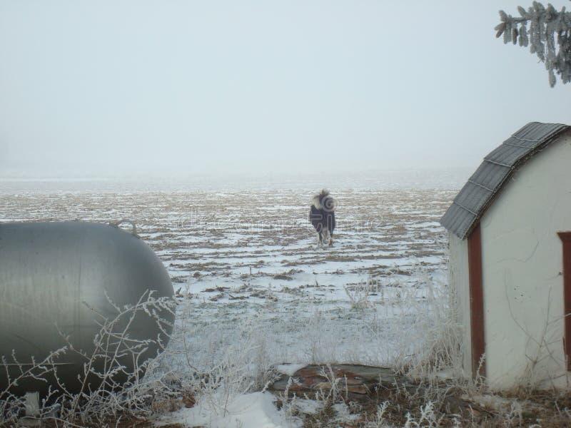 De wintermist en een gebiedshond stock foto's
