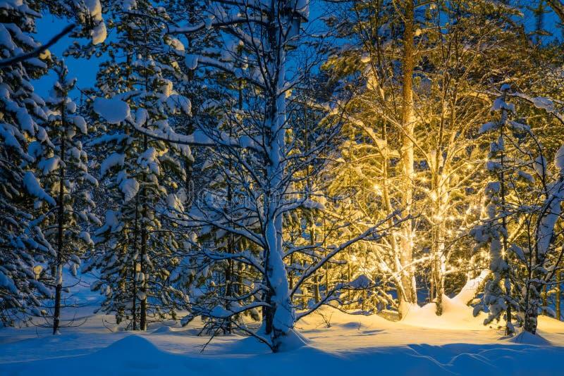 De winternacht in bos en Kerstboom het gloeien lichten stock foto's