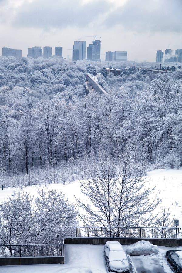 Download De Winterochtend Van Toronto Stock Afbeelding - Afbeelding bestaande uit cityscape, schemer: 29513191