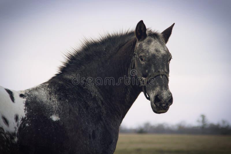 De winterpaard royalty-vrije stock afbeelding