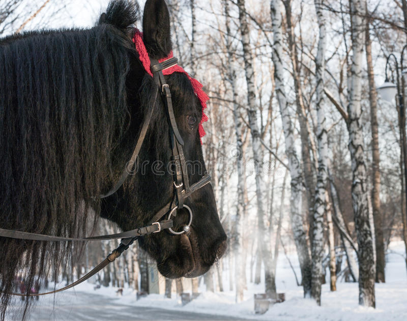 De winterpaard stock afbeeldingen