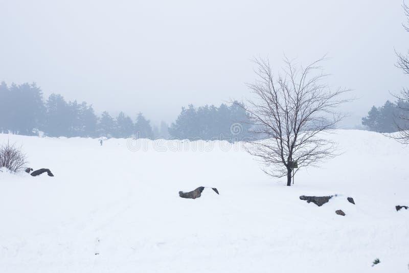De winterpark in de mist royalty-vrije stock foto