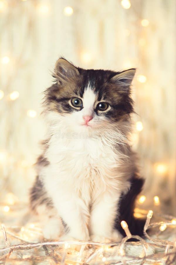 De winterportret van een klein leuk katje op een gebreide deken in de lichten van een slinger stock fotografie