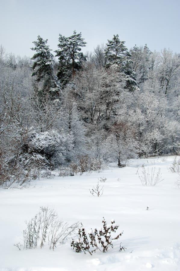 De winterscène royalty-vrije stock afbeeldingen