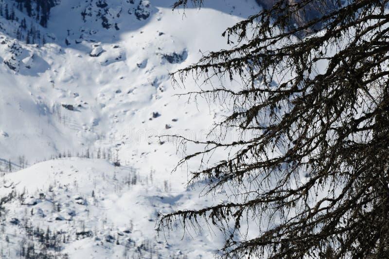 De winterscène in Dolomiet, Italië royalty-vrije stock afbeelding