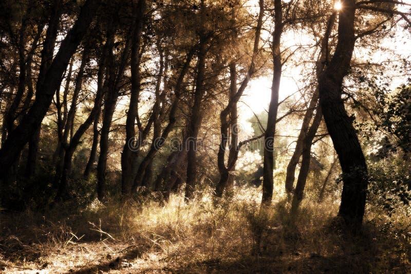 De winterscène in het bos stock fotografie