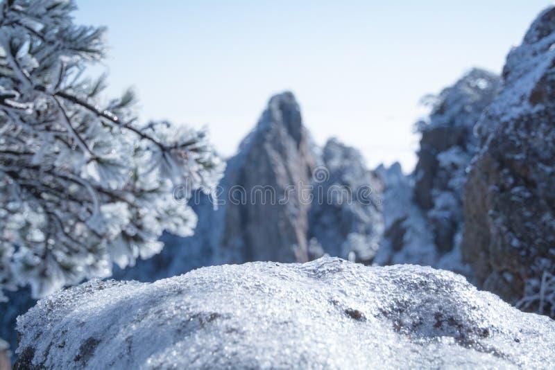 De winterscène met ijs behandelde bomen en berg royalty-vrije stock afbeelding