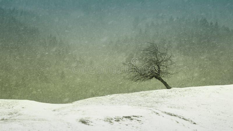 De winterscène met leunend boom en sparbos op de achtergrond royalty-vrije stock afbeeldingen