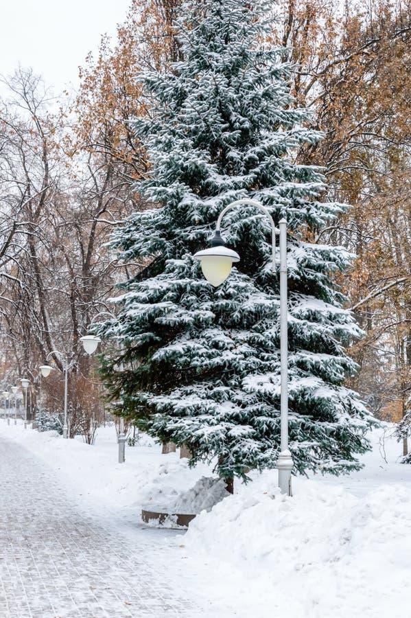 De winterscène: sneeuw behandelde weg, lantaarns en spar in een park Sneeuw de winterachtergrond met Kerstboom in openlucht stock foto's