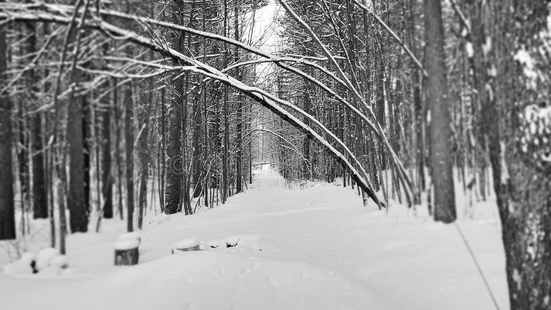 De wintersleep, Cheboygan Michigan royalty-vrije stock foto