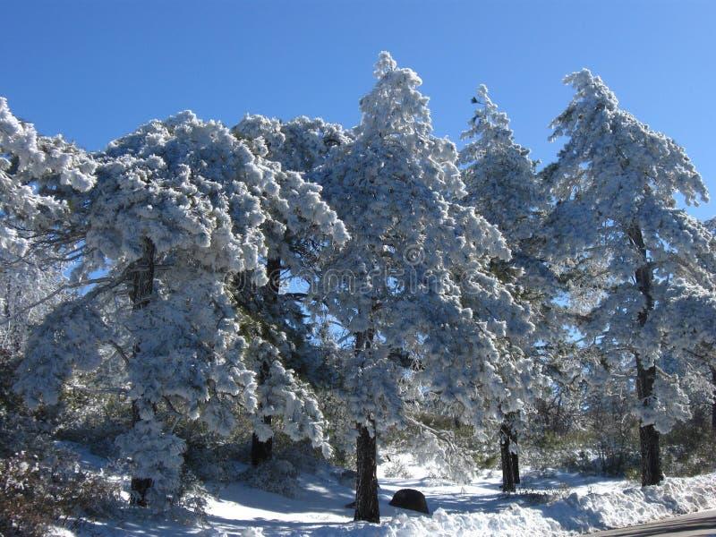 De wintersneeuw stock foto's