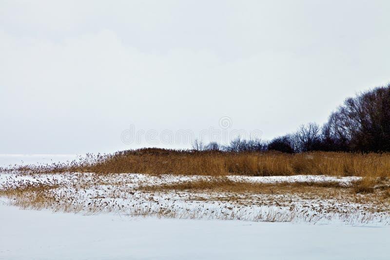 De wintersneeuw bevroren meer met bruin gras en riet stock foto
