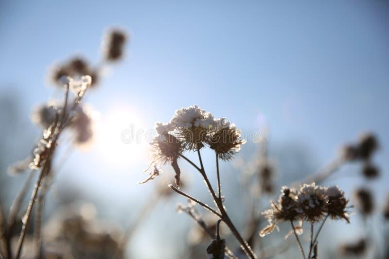 De wintersneeuw - Bloemen in de sneeuw royalty-vrije stock foto