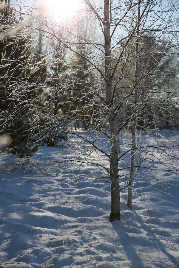 De wintersneeuw - Bomen in de sneeuw stock afbeelding